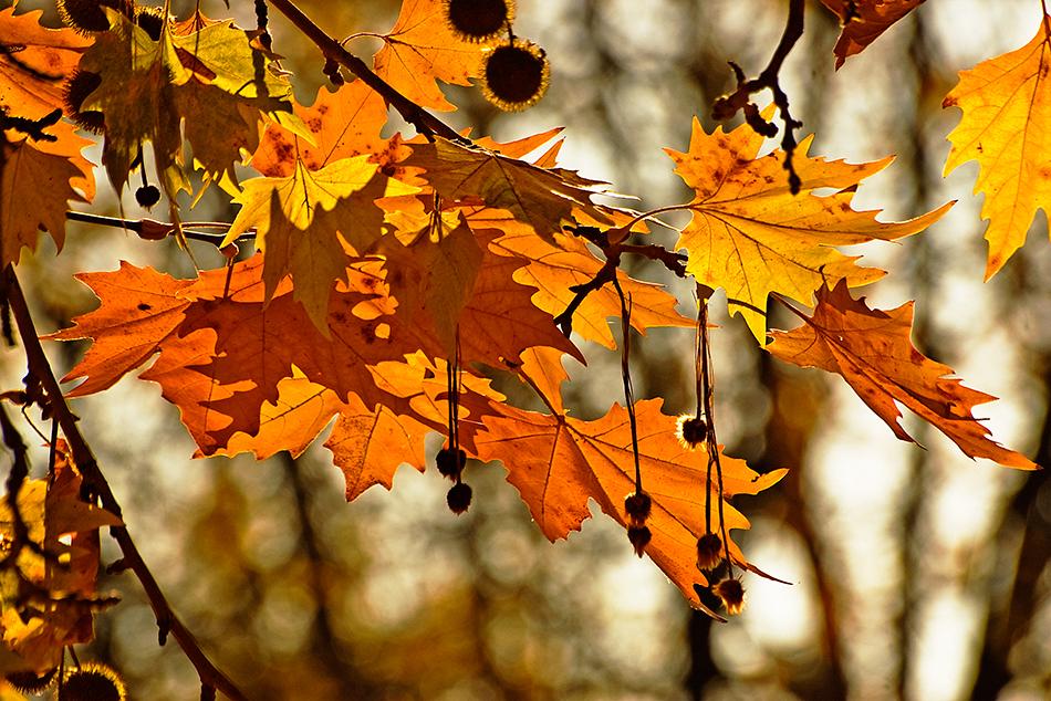 Есента започнува со сончево, но студено време