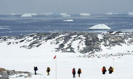 На Антарктикот пронајдени фосили од дрва стари 280 милиони години