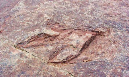 Туристи фрлиле во вода 200 милиони години стари отисоци од диносауруси